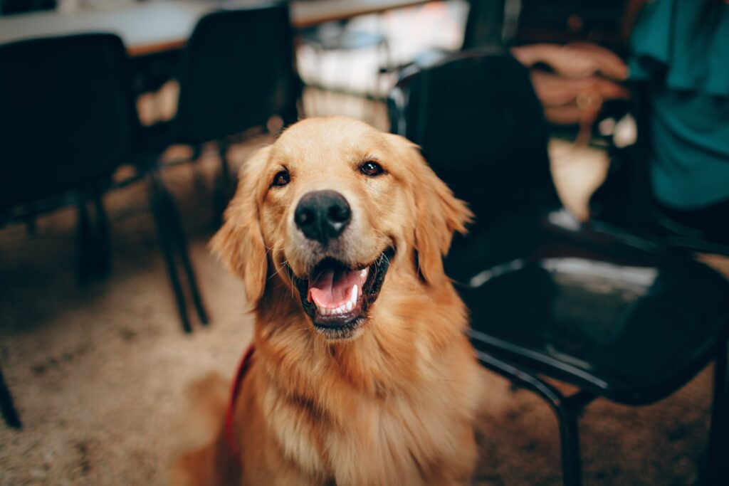 Having a dog improves your health