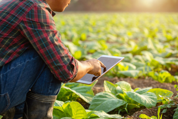 'Smart agro' against climate change